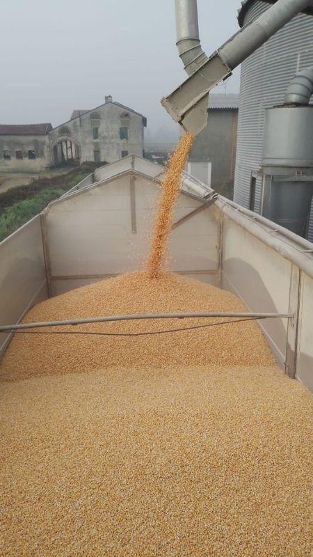 trasporto cereali rinfusa alborghetti nord italia